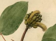 Flora brasileira sem identificação