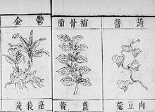 Bencao gangmu <br> 1655