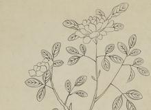 纺织作物及各种桑树物种